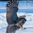 Owls - Silent Hunters by Owl-Images