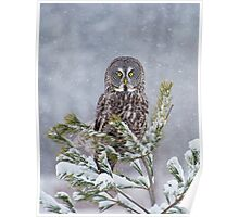 Great Gray Tree Ornament Poster