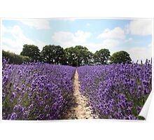 Lavender Fields, Hampshire Poster