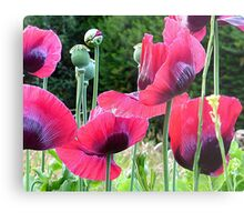 Poppyland.............................Most Products Metal Print