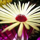 daisy  by lisaellen