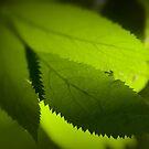 Greenery by Laurent Hunziker