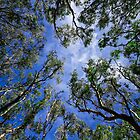 Looking up through the canopy by AlexKokas