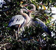 Pausing from Nestbuilding by Judy Wanamaker