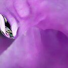 Raindrops on Purple by paintingsheep