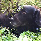 Dog In The Flowers by JonDavis33