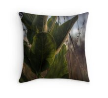 Backlit Milkweed Throw Pillow