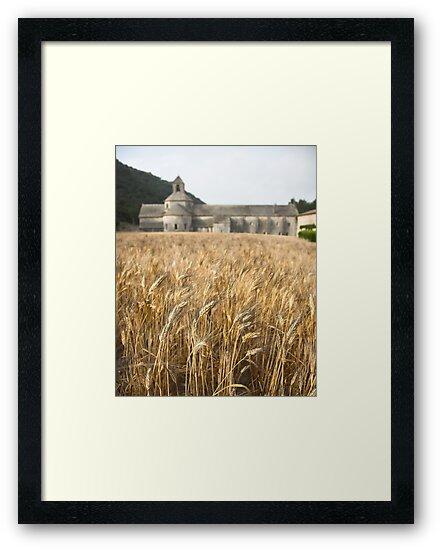 Wheat field, l'Abbaye de Senanque, Provence by Christopher Barton