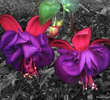 Fuchsia Flowers by Edmond  Hogge