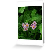 Russet Potato Blossoms Greeting Card