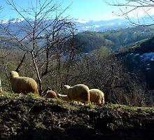 Sheep & beautiful landscape  by lemoutonvert