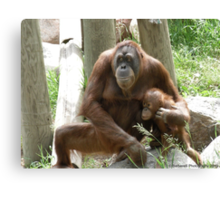 Unconditional Love - Mother and Baby Orangutan Canvas Print