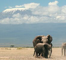 Elephants and Mount Kilimanjaro by Graeme Shannon