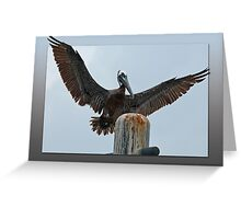 Brown Pelican coming in for the landing Greeting Card