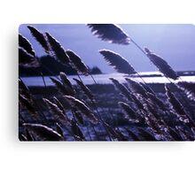 Wind in River Grass 3 Canvas Print