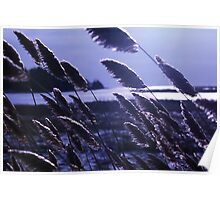 Wind in River Grass 3 Poster