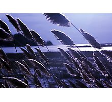 Wind in River Grass 3 Photographic Print