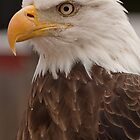 Proud symbol of our Freedom by Rick Montgomery
