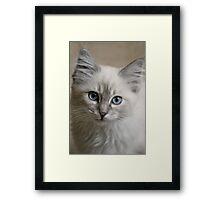 Old Blue Eyes... Framed Print