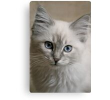 Old Blue Eyes... Canvas Print
