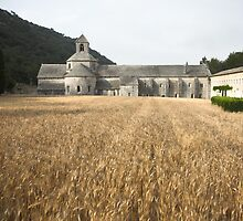Wheat field, l'Abbaye de Senanque, Provence by Christopher Barton