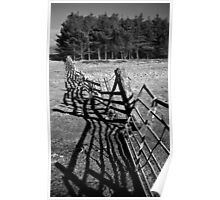 Fence and Trees near Point Sands Poster