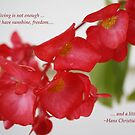 Begonia with quote by Cathy O. Lewis