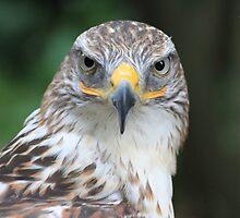 King Hawk (Butea Regalis) by DutchLumix
