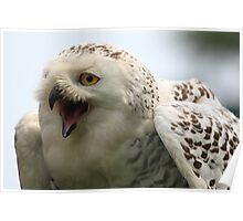 The Snowy Owl, Bubo scandiacus 2 Poster