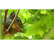 Squirrel in the Woods Photographic Print