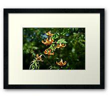 Canada Lilies Framed Print