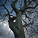 Abstract Tree by Laura Cooper