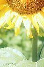 Sunflower 3 by aMOONy