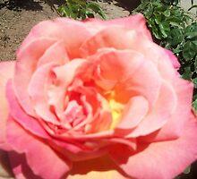Open Hearted Rose by BingoStar