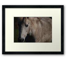 Equine beauty Framed Print