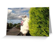 He`s Not Really! Greeting Card