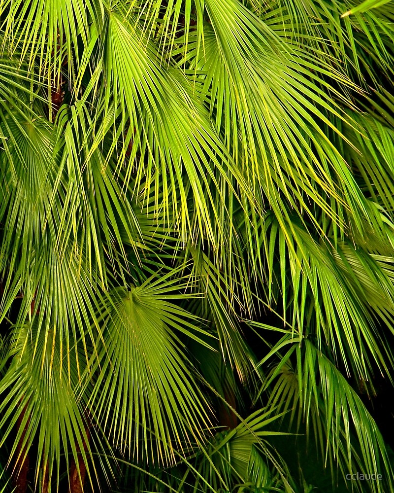 Palms by cclaude