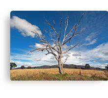 One Tree - Mudgee/Ilford Sydney Australia Canvas Print