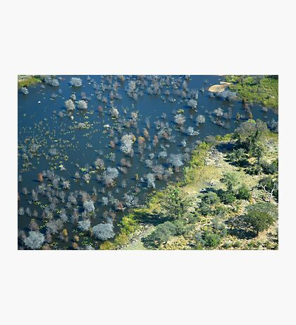 The glorious Okavango Delta in Botswana Photographic Print