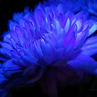 blue floral - using white balance mode by Nikki Lesley