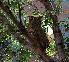 Midnight Owl by Edmond  Hogge