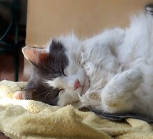 Adorable cat sleeping by TranquilArt