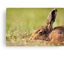Day Dream Hare Canvas Print