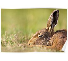 Day Dream Hare Poster