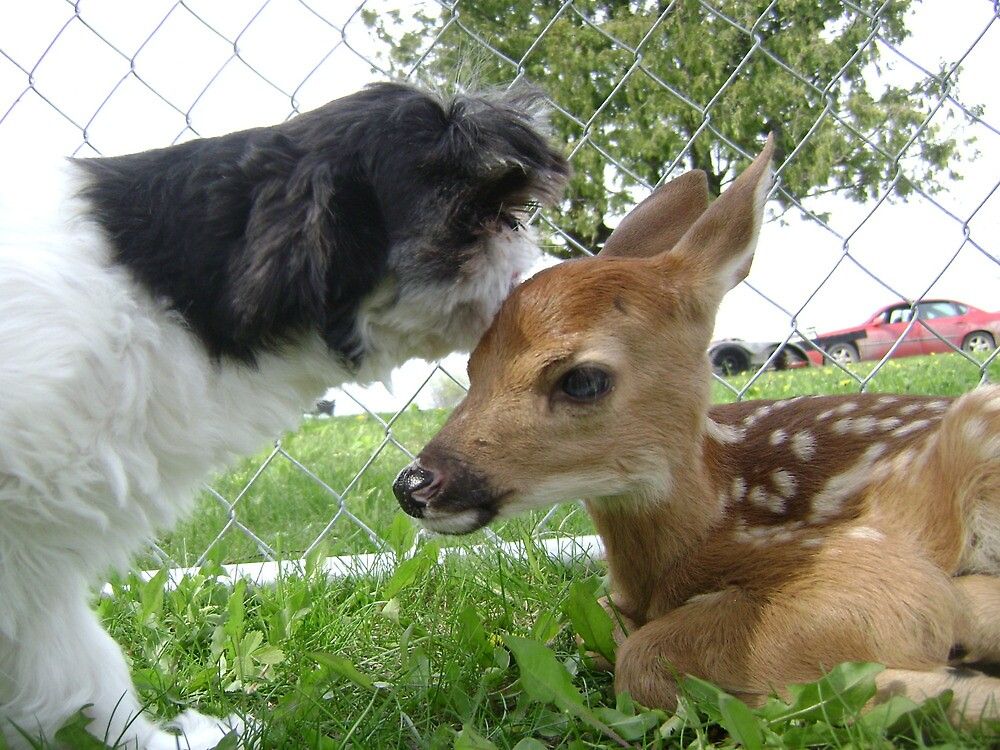 For the love of a fawn by stirlingacre
