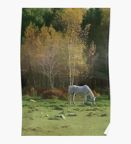 Rural Autumn Pasture Beauty Poster
