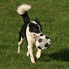 Border Collie World Cup 2 by Tania Biancon