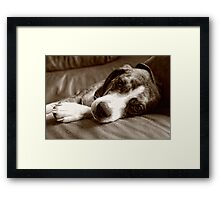 Sleepy Boy: II  Framed Print