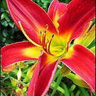 Lily # 4 by Mattie Bryant