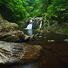 Rainforest Paradise - Cairns by Mark Shean